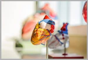 Cardiovascular Conditions We Treat